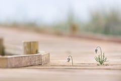 带领木的足迹靠岸在多雨天气 免版税库存照片