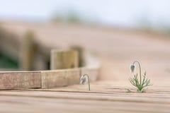 带领木的足迹靠岸在多雨天气 免版税库存图片