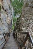带领游人的垂直的步峡谷维登底部  图库摄影