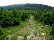 带领的供徒步旅行的小道下坡 免版税库存照片