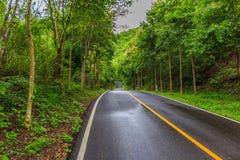 带领的弯曲道路和密集的森林地 免版税库存照片