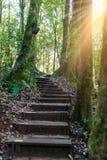 带领通过密林的Kew Mae平底锅自然痕迹迁徙的足迹 库存照片