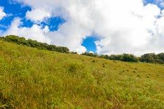 带领通过密林的Kew Mae平底锅自然痕迹迁徙的足迹 图库摄影