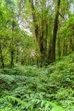 带领通过密林的Kew Mae平底锅自然痕迹迁徙的足迹 免版税库存照片