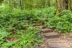 带领通过密林的Kew Mae平底锅自然痕迹迁徙的足迹 库存图片