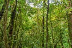 带领通过密林的Kew Mae平底锅自然痕迹迁徙的足迹 免版税库存图片
