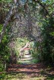 带领通过扭转和绞的树的道路 免版税库存图片
