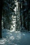 带领通过杉木森林的雪足迹 库存照片