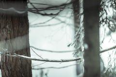 带领通过杉木森林的雪足迹 库存图片