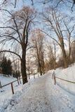 带领通过树的雪道 免版税图库摄影
