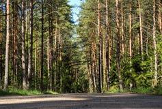 带领通过森林的小路 图库摄影