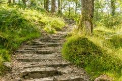带领通过森林的道路上升 免版税库存照片
