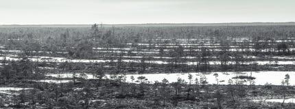 带领通过冻沼泽的木足迹在拉脱维亚 免版税库存图片