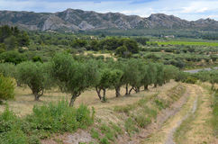 带领通过Provencal山的道路 免版税库存图片