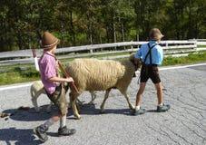 带领绵羊的两个小男孩 库存照片
