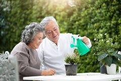 帮助亚洲资深的夫妇喜欢植物 库存照片