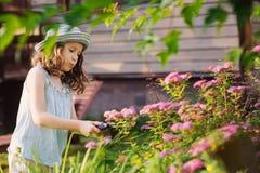 帮助小花匠儿童的女孩整理和被切开的spirea灌木 图库摄影