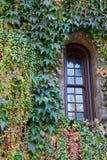 常春藤包围的视窗 库存图片