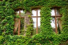 常春藤卷须和叶子构筑窗口 免版税库存照片