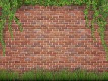 常春藤和草在砖墙背景 免版税图库摄影