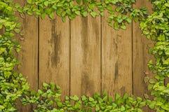 常春藤在板条木头墙壁上的叶子框架 库存照片
