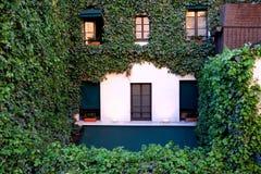 常春藤盖的老房子在巴黎,法国 库存图片