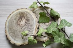 常春藤裁减树和分支  时髦的装饰 免版税库存图片