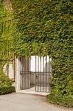 常春藤覆盖的格子的门在一个晴天 库存照片