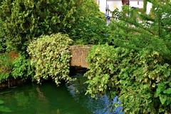 常春藤覆盖的桥梁 免版税图库摄影