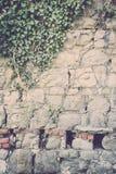 常春藤覆盖的老石墙 免版税库存图片