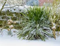 常绿植物在一个积雪的庭院里 库存照片