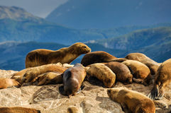 常设封印,小猎犬海峡,乌斯怀亚,阿根廷 免版税库存照片