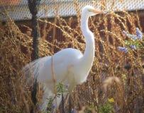 常设高是一台纯净的白色用羽毛装饰的美丽的起重机 免版税库存图片