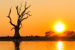 常设死的树和日落,在缅甸(Burmar)的Amarapura 库存图片