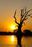 常设死的树和日落,在缅甸(Burmar)的Amarapura 库存照片