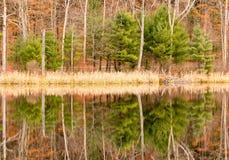 常青树、叶子下落树、芦苇和反射在池塘和秋天颜色 库存图片