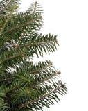 常青的大树枝 库存照片