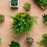 常青盆的植物品种工艺纸背景的 库存照片