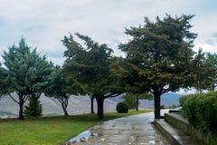 常青针叶树和一条湿道路在雨以后的公园反对山和阴暗天空背景  免版税库存照片