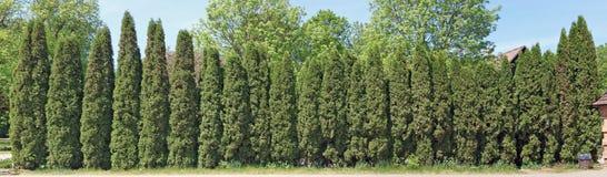从常青针叶树的理想的长和高绿色篱芭 库存图片