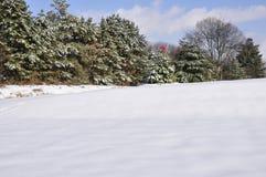 常青雪结构树 库存照片