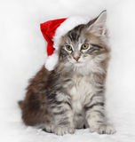 帽子小猫圣诞老人 免版税库存图片