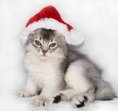 帽子小猫索马里的圣诞老人 免版税库存照片