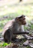 帽子提供的短尾猿 免版税库存照片