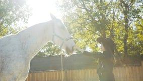帽子爱抚马` s鼻子的愉快的女孩在太阳起来背景 股票录像