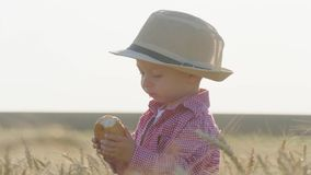 帽子的愉快的矮小的小孩吃面包,当站立在麦田在日落时 夏天乡下生活和农业 股票录像
