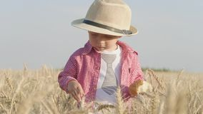 帽子的愉快的矮小的小孩吃面包,当站立在麦田在日落时 夏天乡下生活和农业 股票视频