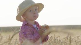 帽子的愉快的矮小的小孩吃面包,当站立在麦田在日落时 夏天乡下生活和农业 影视素材