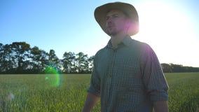 帽子的英俊的男性农夫走在他的农场的绿色麦田的 去在谷物种植园的年轻确信的人 股票录像
