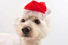 帽子高地西部圣诞老人狗年轻人 免版税库存图片